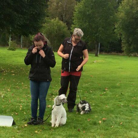 Hundkurs nybörjarkurs rallylydnad