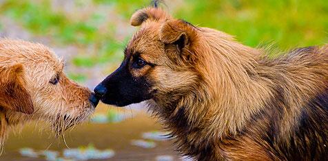 Allmänlydnadspasset  Inomhus i Värnamo hundarena