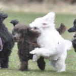 Hundkurs och träning startklass
