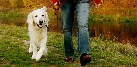 Lösa hundar i skog och mark