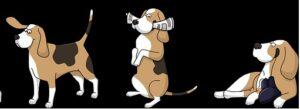 Kurs Värnamo Hundungdom vår